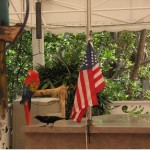 Parrot and Flag