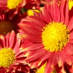 How to get to know a woman- ask her about her favorite flowers-1
